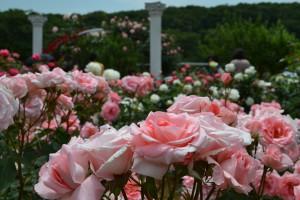 1写真(春のばら苑)